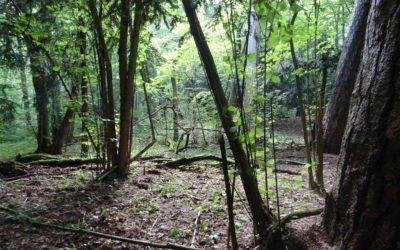 Rezerwat Cisów Staropolskich